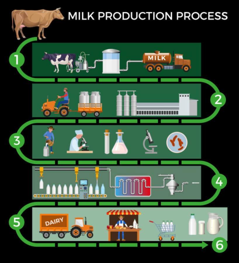 Milk Production Pasteurization